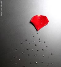 crying-petal-1