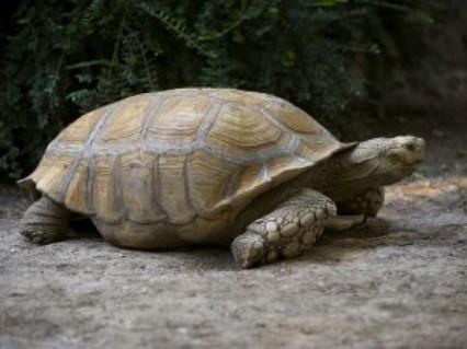 tartaruga-gigante_21143752